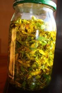 Zalane oliwą kwiaty dziurawca.