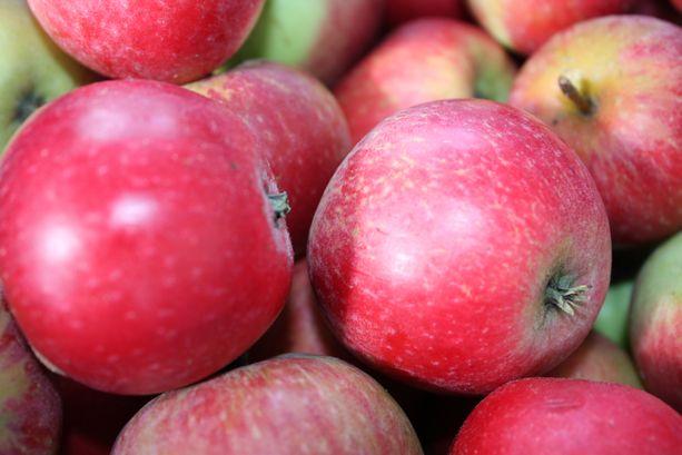 Do zrobienia octu można użyć małych jabłek. Te są ekologiczne - nie opryskiwane.