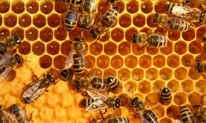 Wosk pszczeli jest wartościowym składnikiem w naturalnych kosmetykach.