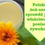 Polski Żeń-szeń -  Żywokost ( Symphytum officinale L).