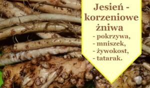 korzen-mniszka-tatarak-pokrzywa-żywokost