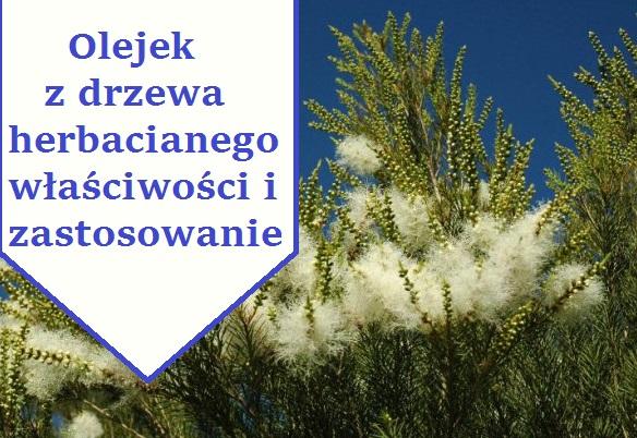 olejek-z-drzewa-herbacianego